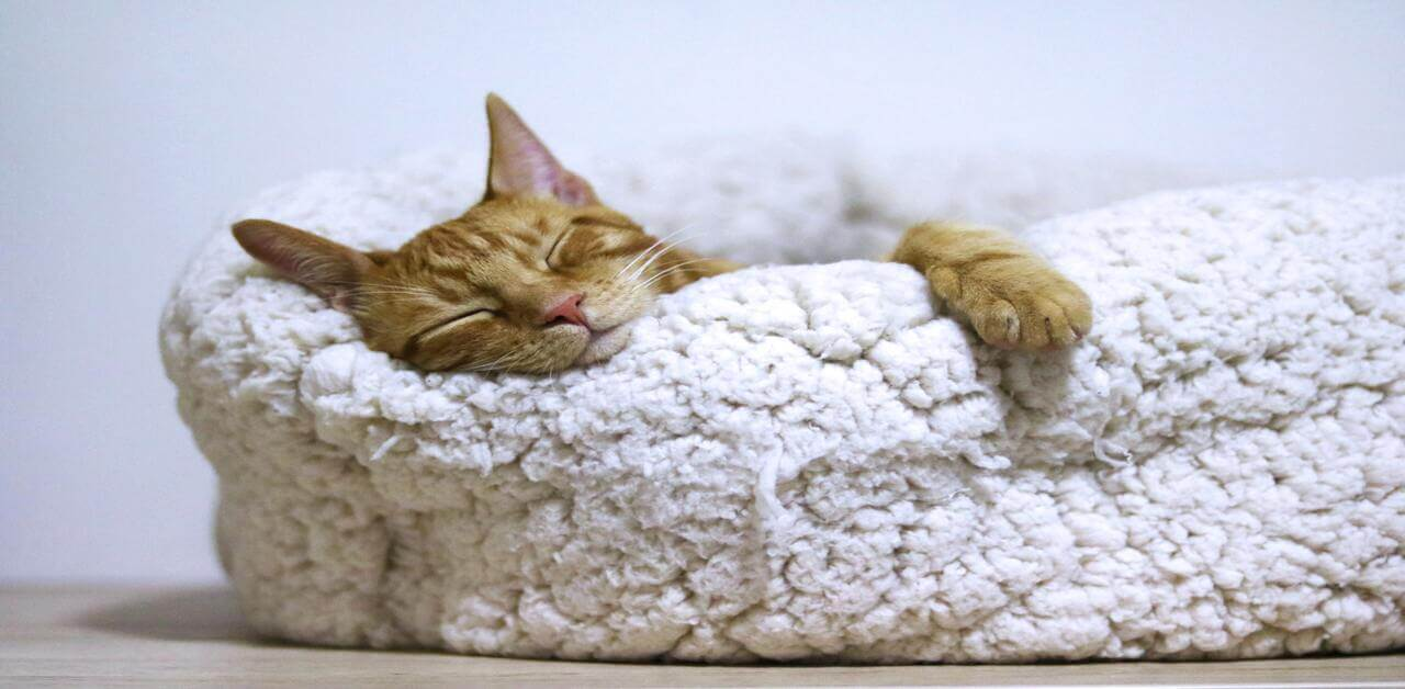 有必要幫寵物補充骨膠原?有必要幫貓貓提升免疫力?