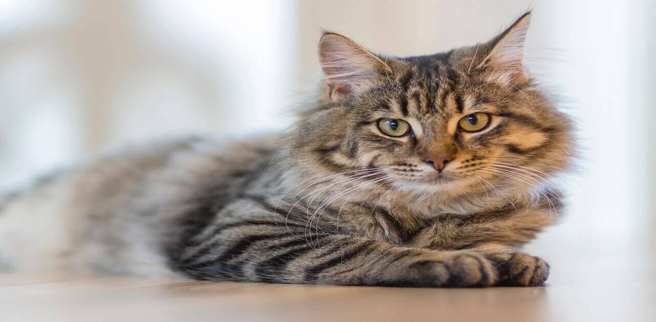 為何老貓保健這麼重要?